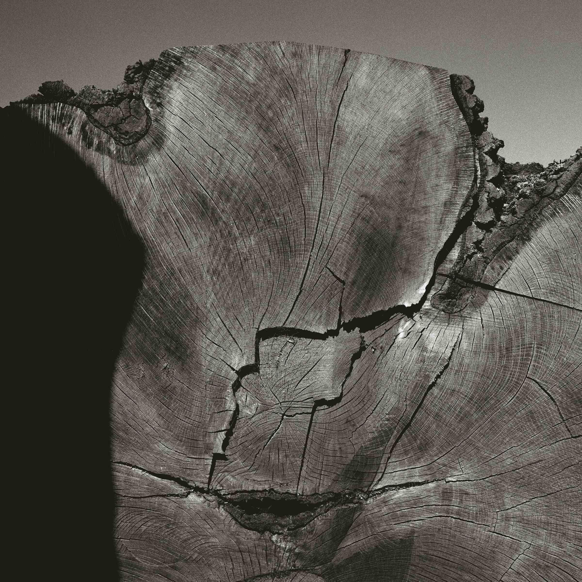 Wood Iv Wiltshire 1995